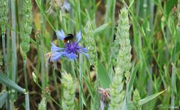 Blumenpracht am Wegesrand, Amseln trällern ihr Lied zur Blauen Stunde