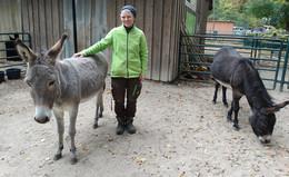 Neue tierisches Mitglied im Heimattiergarten: Eseldame Lotte