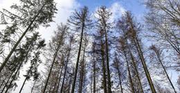Umweltministerin Priska Hinz stellt Maßnahmen für klimastabilen Wald vor