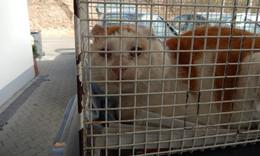 Tierschutzverein in Sorge: Drei Katzen einfach ihrem Schicksal überlassen