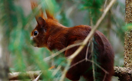 Graugänse und Graureiher im Rhäden, Eichhörnchen im Seulingswald