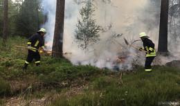 14-Jährige verhindern Waldbrandkatastrophe in Dittlofrod