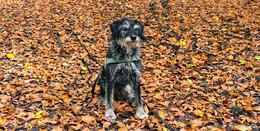So viele schöne Hunde in Osthessen - Leserbilder (4) zum Welthundetag
