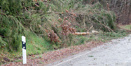 Sturmtief Victoria hinterließ einige umgestürzte Bäume