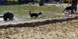 Hundeschwimmen bei wunderbarem Sommerwetter im Naturbad