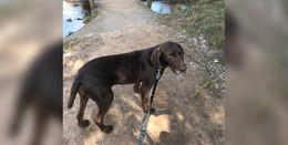 Vom Wunsch, endlich anzukommen: Hund Charlie sucht ein neues Zuhause