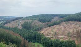 Bilanz in Bundespressekonferenz: Milliarden-Schäden in der Forstwirtschaft