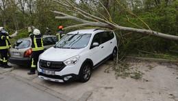 Dach eingedrückt- Baum stürzt auf zwei Fahrzeuge