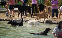 Über 200 Hunde planschen bei strahlendem Sonnenschein im Schwimmbad