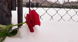 74. Jahrestag der Befreiung: Auschwitz mit eigenen Augen gesehen...