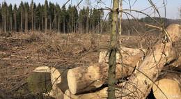 Aktuelle Schadenssituation - Sorge um den städtischen Wald