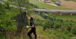 Kontrolle von Insektenfallen fordern gute Kletterfähigkeiten