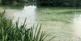 Kippt das Wasser im Aueweiher? Anglersportverein gibt Entwarnung