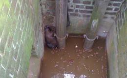 Glücklicher Ausgang: Biber aus Pumpwerk an der Oberau gerettet