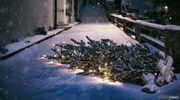 Diebisches Christkind?: 30 Weihnachtsbäume gestohlen