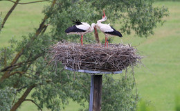 Wunderbare Naturimpressionen am Fuldaufer - Bilder und Video