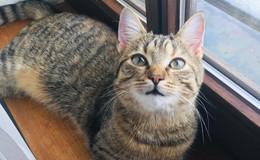 Katze Ursel wird schmerzlich vermisst: Wer hat sie gesehen?