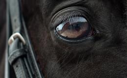 Folgenschwerer Zusammenstoß: Pferd verendete an Unfallfolgen