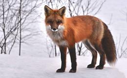 Notzeit für das Wildin den Hochlagen: Jagdbehörde ruft zur Fütterung auf