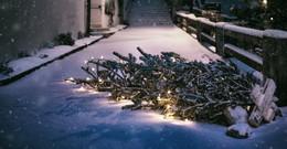 Weihnachtsbäume in Bio-Tonne entsorgen - Sammlungen finden meist nicht statt