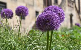 Frische Sommerbepflanzung: 53.108 Blumen bieten herrliche Fotomotive