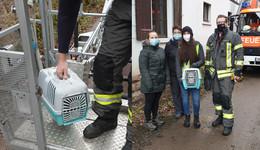 Tierischer Einsatz: Feuerwehr rettet kleine Katze mit der Drehleiter