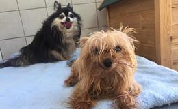 Zwei Hunde auf Rastplatz Pfefferhöhe ausgesetzt: Wir päppeln sie jetzt auf