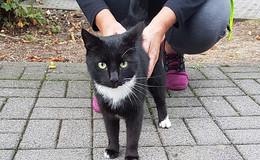 Wer vermisst diese Katze? In Dorfborn zugelaufen