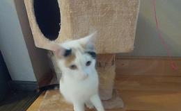Katze Macy ist verschwunden - Wer hat sie gesehen?